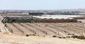 Hazeva fields