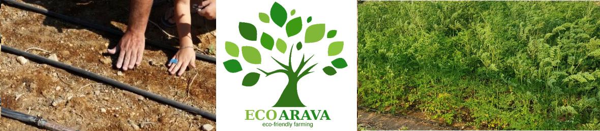 organic moringa oleifera