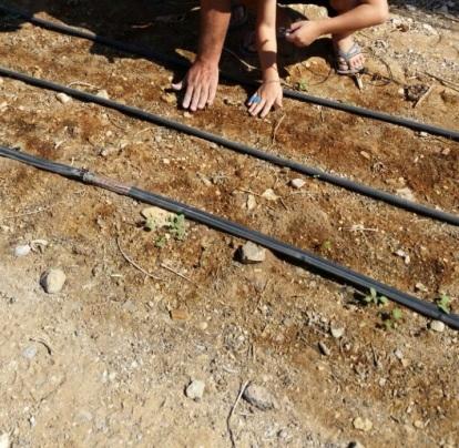 organic moringa eco arava